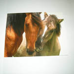 Nuzzling Mustangs card