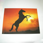 Horse in the Sunset card