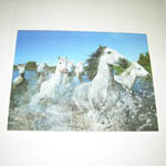 Horses of the Camargue card